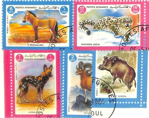 1984 Afghanistan - Wildlife