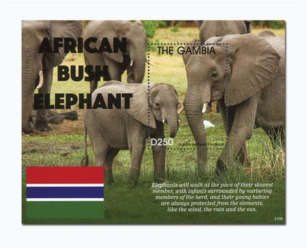 2021 D250 African Bush Elephants, Souvenir Sheet of 1, Gambia