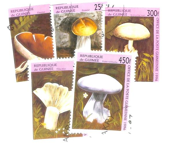 1996 Guinea