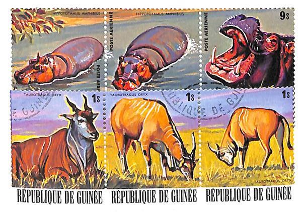 1977 Guinea