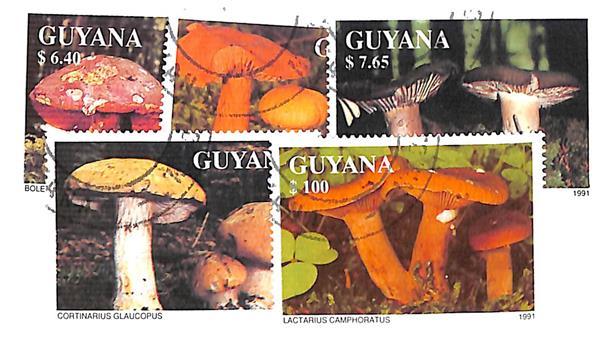 1991 Guyana
