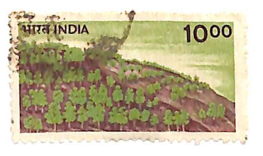 1984 India