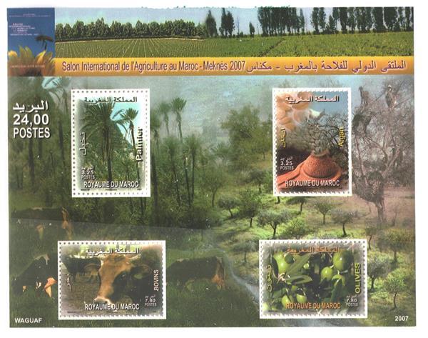 2007 Morocco