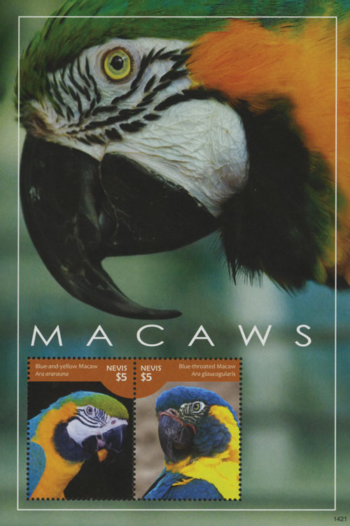 2014 Macaws S/S