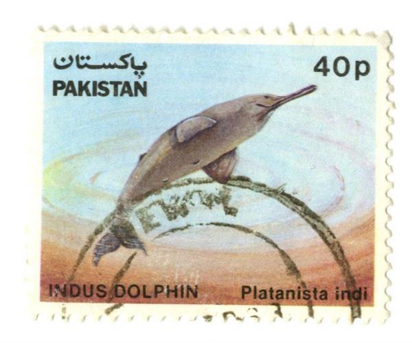 1982 Pakistan