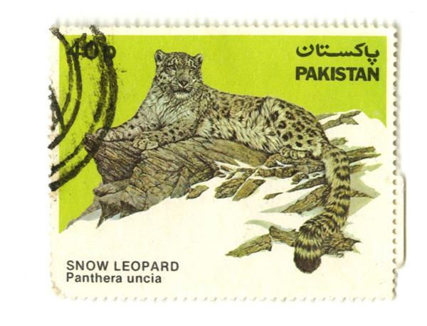 1984 Pakistan