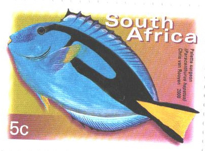 2003 South Africa