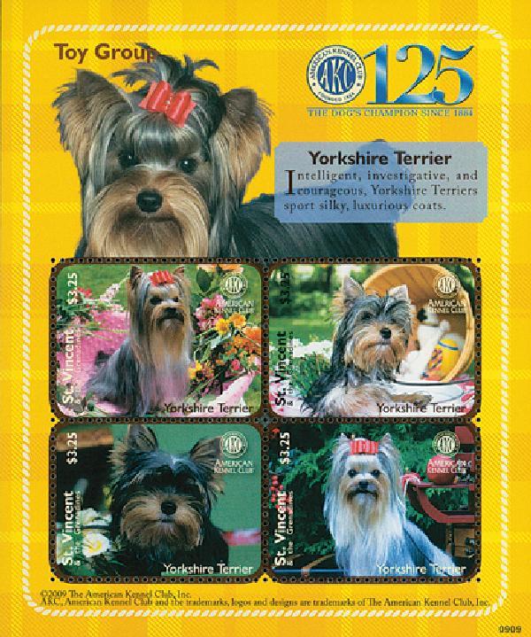 2009 AKC Yorkshire Terrier 4v M