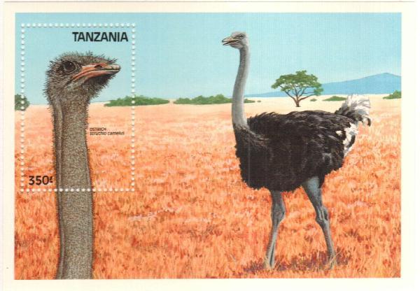 1989 Tanzania