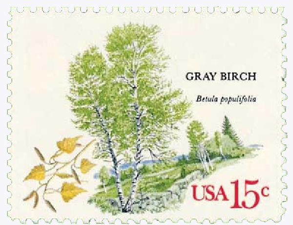 1978 Trees, Gray Birch 15c