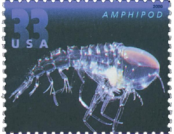 2000 33c Deep Sea Creatures: Amphipod