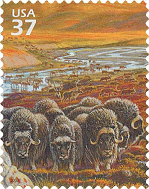 2003 37c Arctic Tundra: Musk Oxen