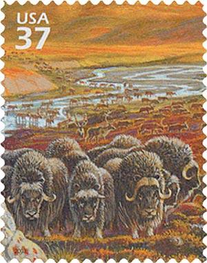 2003 37c Arctic Tundra: Musk Oxen