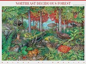 2005 37c Nature of America: Northeast Deciduous Forest
