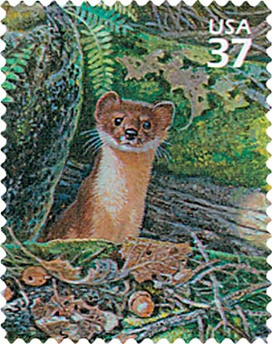 2005 37c Northeast Deciduous Forest: Long-tailed Weasel