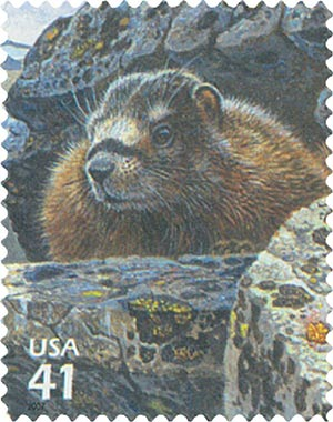 2007 42c Alpine Tundra:Yellow-Bellied Marmot