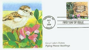 2008 42c Piping Plover Nestlings