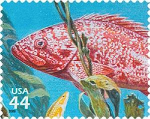 2009 44c Kelp Forest: Vermilion Rockfish