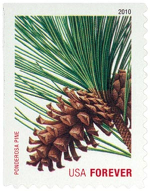 2010 First-Class Forever Stamp -  Holiday Evergreens: Ponderosa