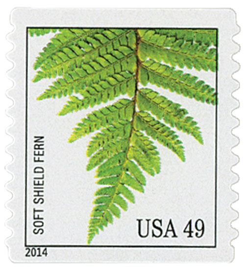2014 49c Ferns: Soft Shield Fern