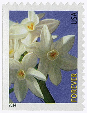 2014 First-Class Forever Stamp - Winter Flowers: Paperwhite