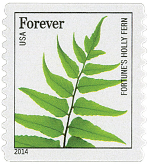 2014 First-Class Forever Stamp - Ferns (non-denominated): Fortunes Holly Fern