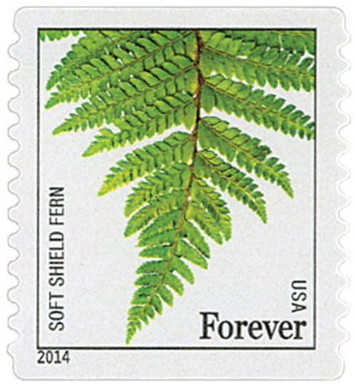 2014 First-Class Forever Stamp - Ferns (non-denominated): Soft Shield Fern