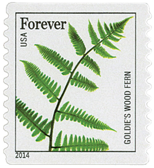 2014 First-Class Forever Stamp - Ferns (non-denominated): Goldies Wood Fern