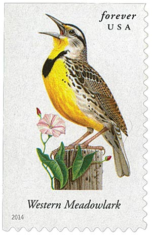 2014 First-Class Forever Stamp - Songbirds: Western Meadowlark
