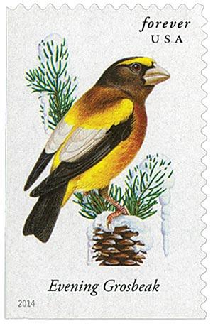 2014 First-Class Forever Stamp - Songbirds: Evening Grosbeak