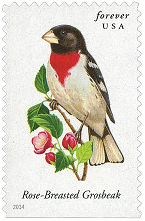 2014 First-Class Forever Stamp - Songbirds: Rose-Breasted Grosbeak