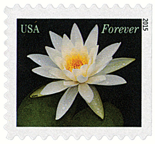 2015 First-Class Forever Stamp - Water Lilies: White