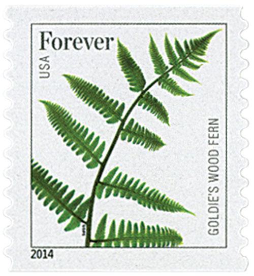 2015 First-Class Forever Stamp - Ferns (with microprinting): Goldies Wood Fern