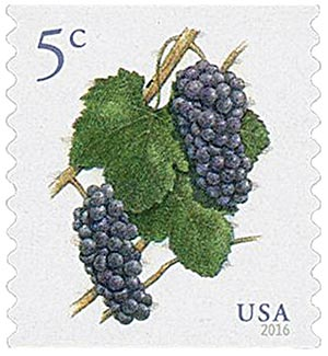 2016 5c Pinot Noir Grapes, coil