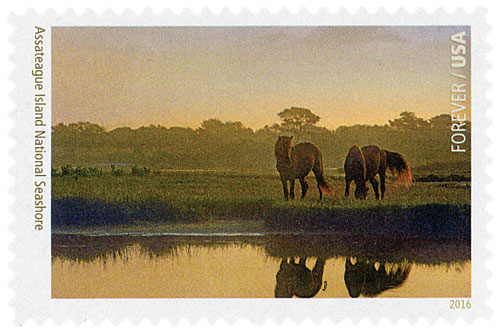 2016 First-Class Forever Stamp - National Parks Centennial: Assateague Island National Seashore