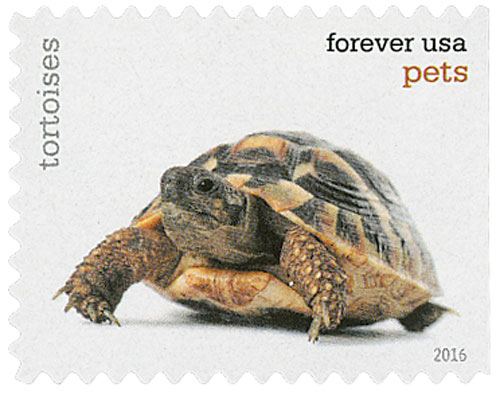 2016 First-Class Forever Stamp - Pets: Tortoises