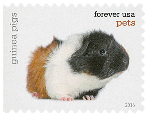 2016 First-Class Forever Stamp - Pets: Guinea Pigs