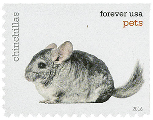 2016 First-Class Forever Stamp - Pets: Chinchillas