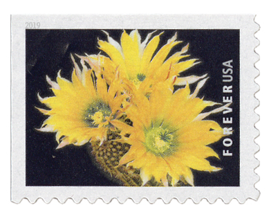 2019 First-Class Forever Stamp - Cactus Flower: Echinocereus dasyacanthus