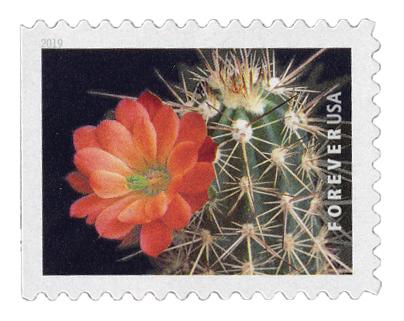 2019 First-Class Forever Stamp - Cactus Flower: Echinocereus coccineus