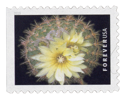 2019 First-Class Forever Stamp - Cactus Flower: Parodia microsperma