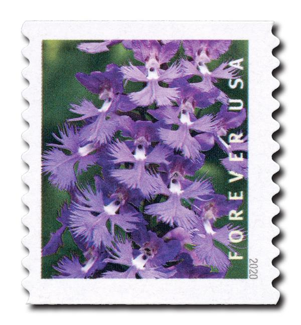 2020 First-Class Forever Stamp - Wild Orchids (coil): Platanthera grandiflora
