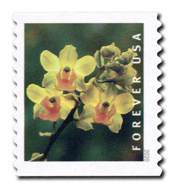 2020 First-Class Forever Stamp - Wild Orchids (coil): Cyrtopodium polyphyllum
