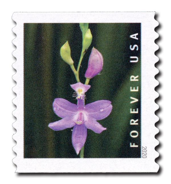 2020 First-Class Forever Stamp - Wild Orchids (coil): Calopogon tuberosus