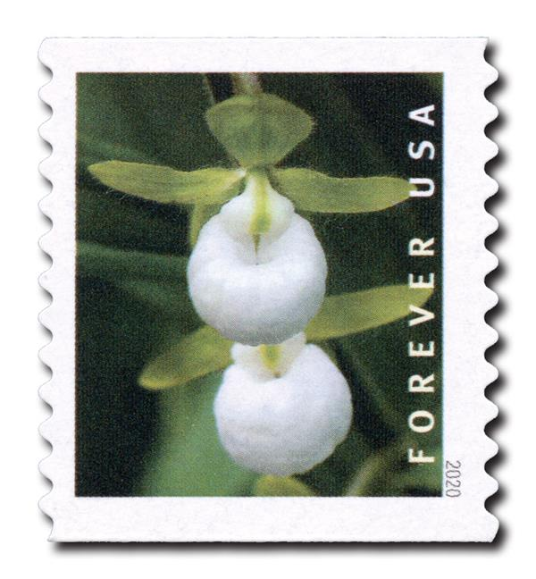 2020 First-Class Forever Stamp - Wild Orchids (coil): Cypripedium californicum