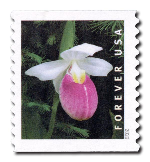 2020 First-Class Forever Stamp - Wild Orchids (coil): Cypripedium reginae