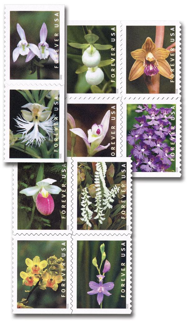 2020 First-Class Forever Stamp - Wild Orchids (booklet)