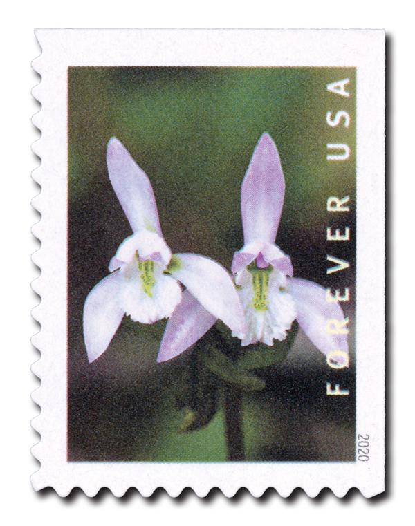 2020 First-Class Forever Stamp - Wild Orchids (booklet): Triphora trianthophoros, 2 flowers