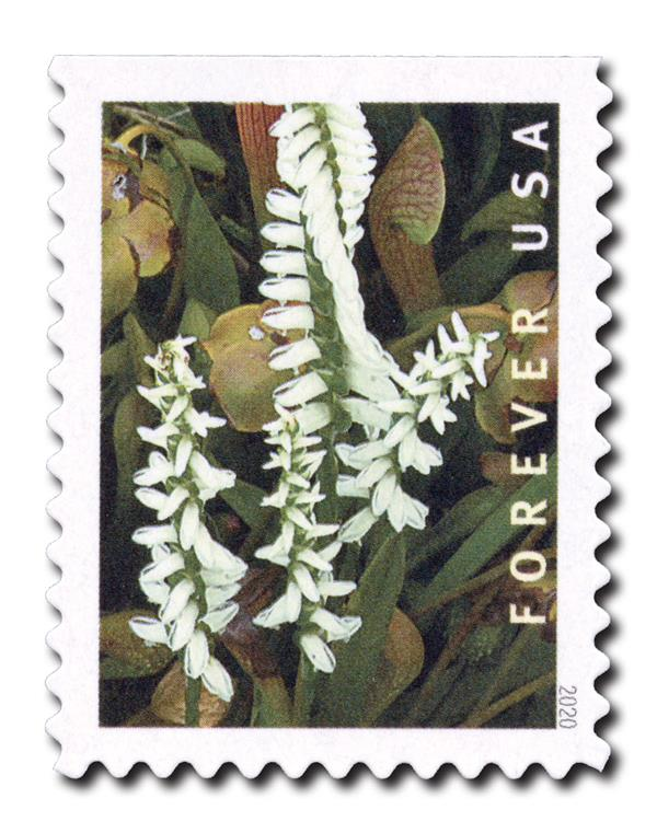2020 First-Class Forever Stamp - Wild Orchids (booklet): Spiranthes odorata