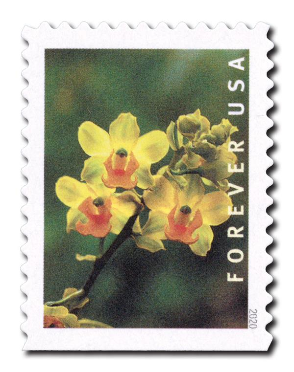 2020 First-Class Forever Stamp - Wild Orchids (booklet): Cyrtopodium polyphyllum